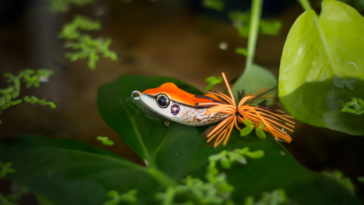 A frog lure sitting on top of lily pads in water.