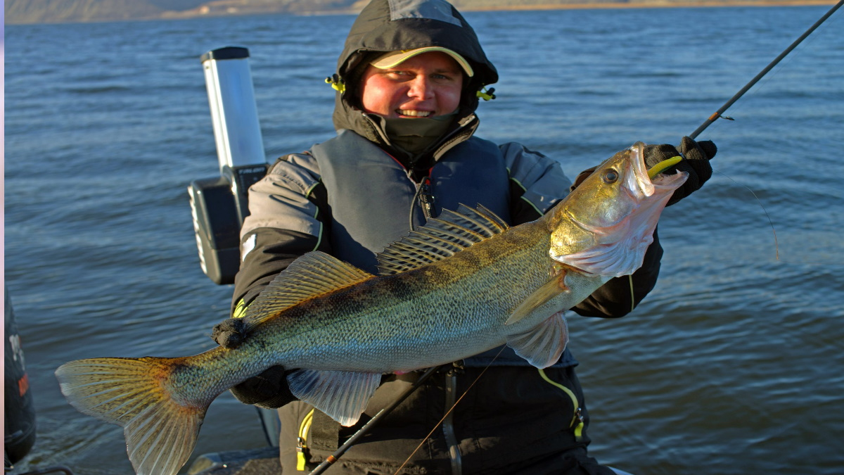 Walleye fisherman holding a trophy walleye with a lure in its teeth.