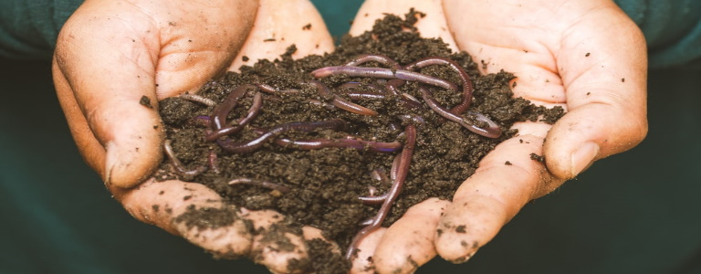 Earthwrms and dirt being held inside a pair of hands.