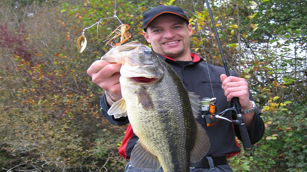 Largemouth bass on a spinnerbait being held by an angler on the shore.