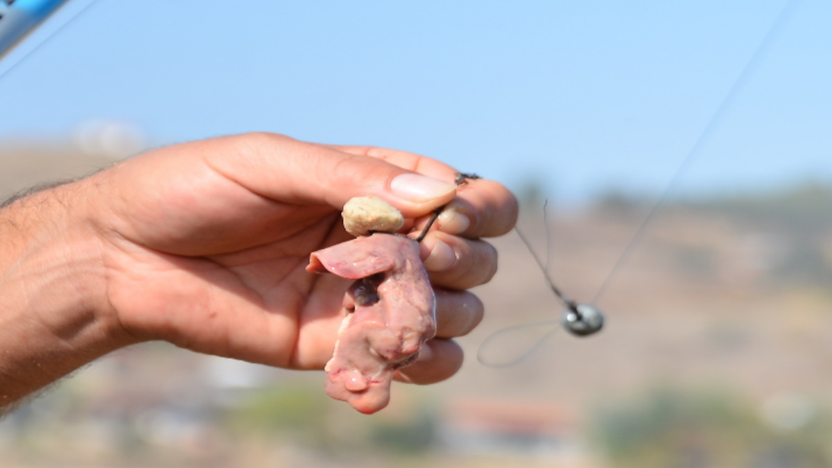 Chicken liver on a hook as a rig for catfishing.