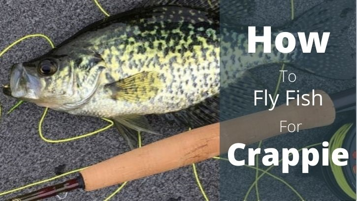 Crappie caught on a fly rod laying on the ground.