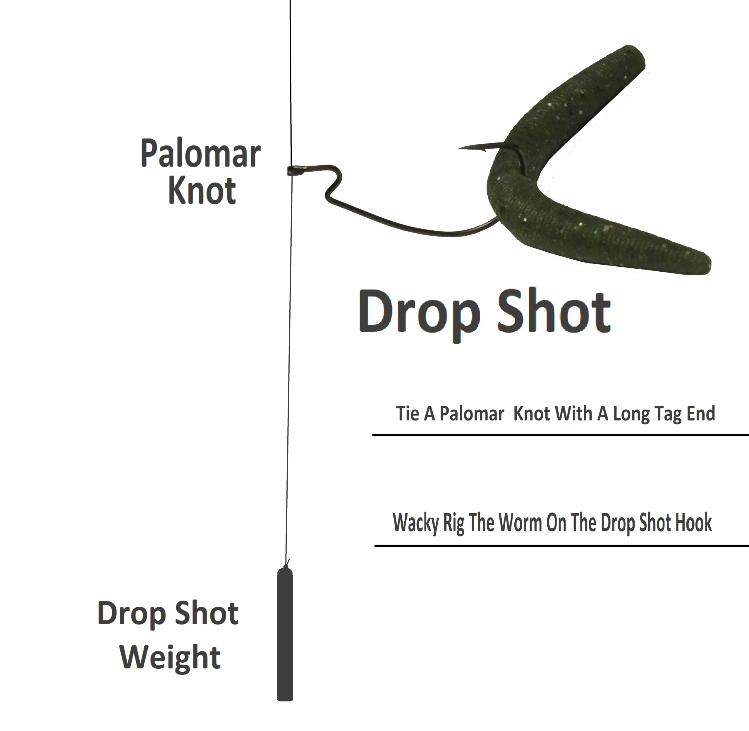 A diagram of a wacky rigged worm on a dropshot rig.
