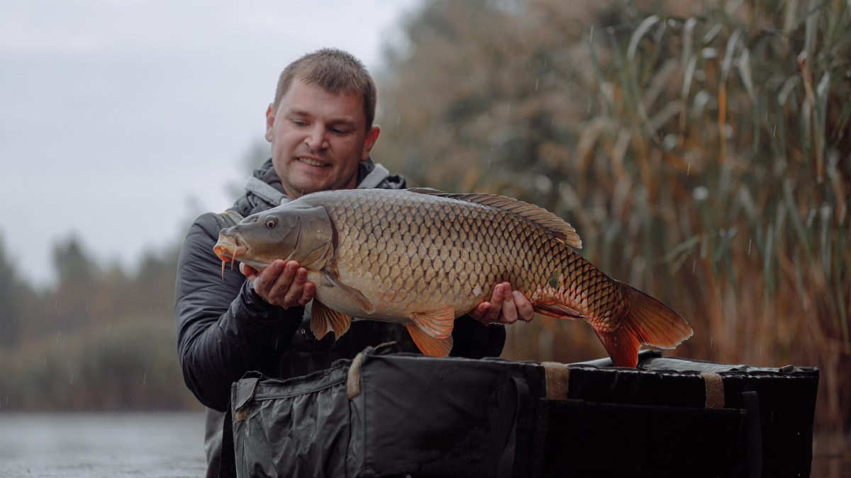 Man holding a carp in water wearing waders on a cloudy day.