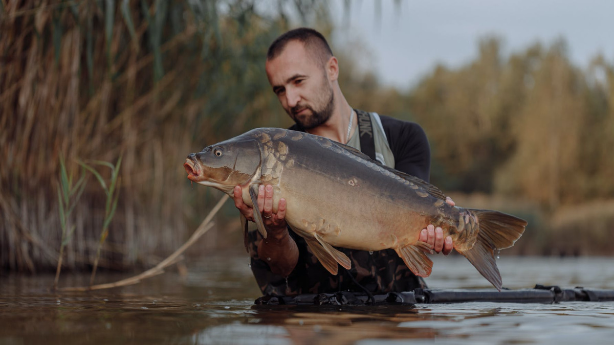 Man holding a mirror carp in water wearing waders on a cloudy day.